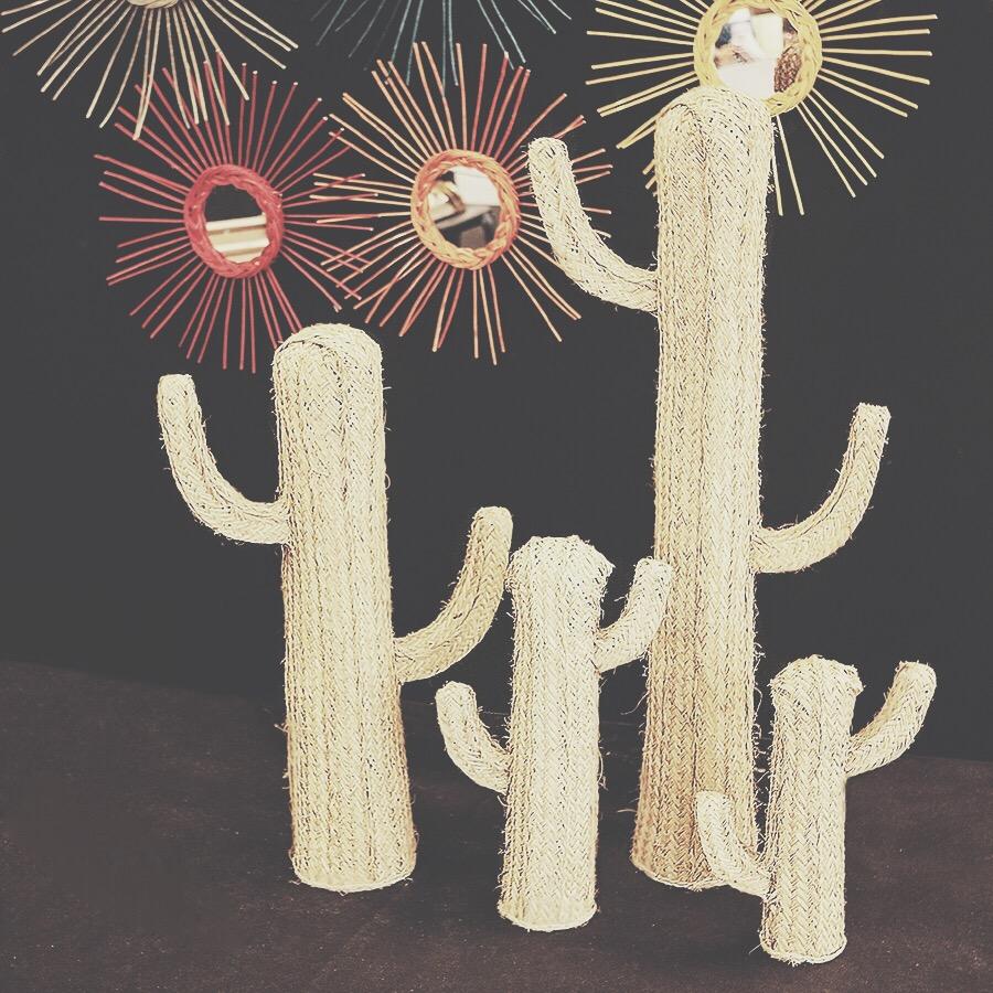 Alfonz cactus